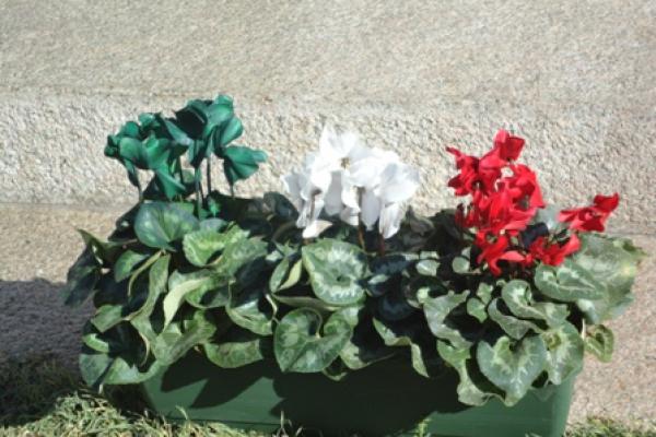 tricolore2FD3DBE9-A81A-E0E9-721C-32A113CB2F1F.jpg